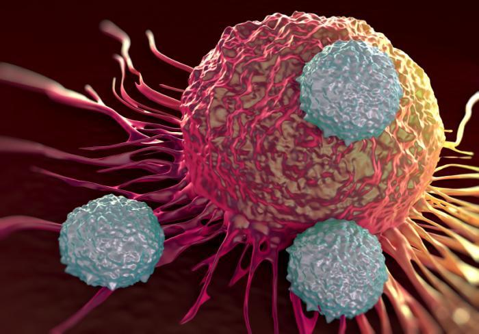 [Le cellule immunitarie attaccano il cancro