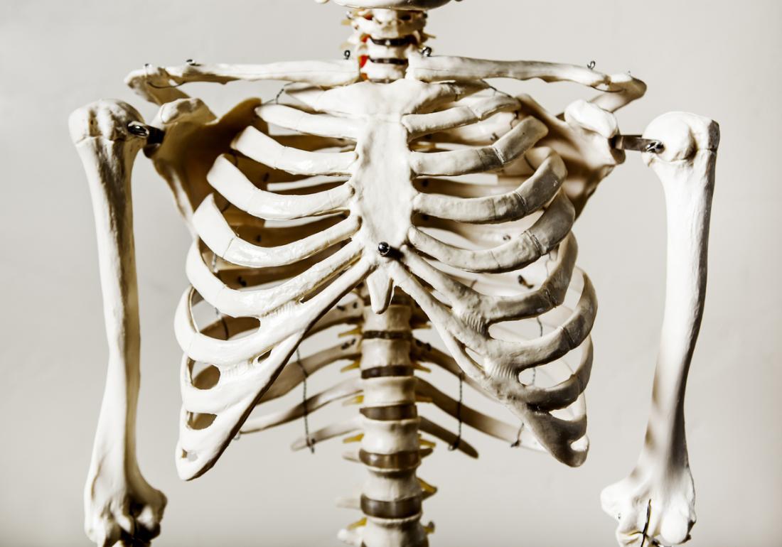 göğüs kafesi modeli