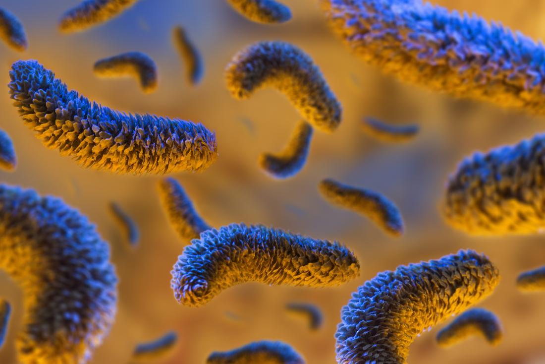 bactéries sur fond orange