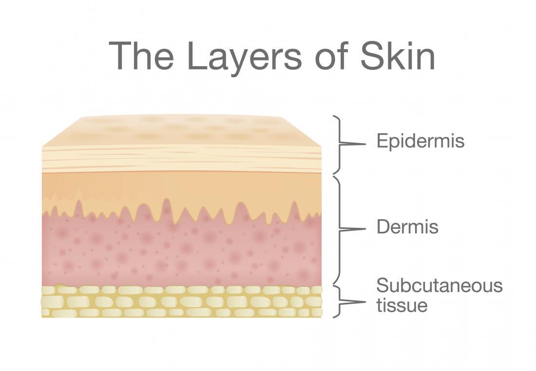 Camadas de pele