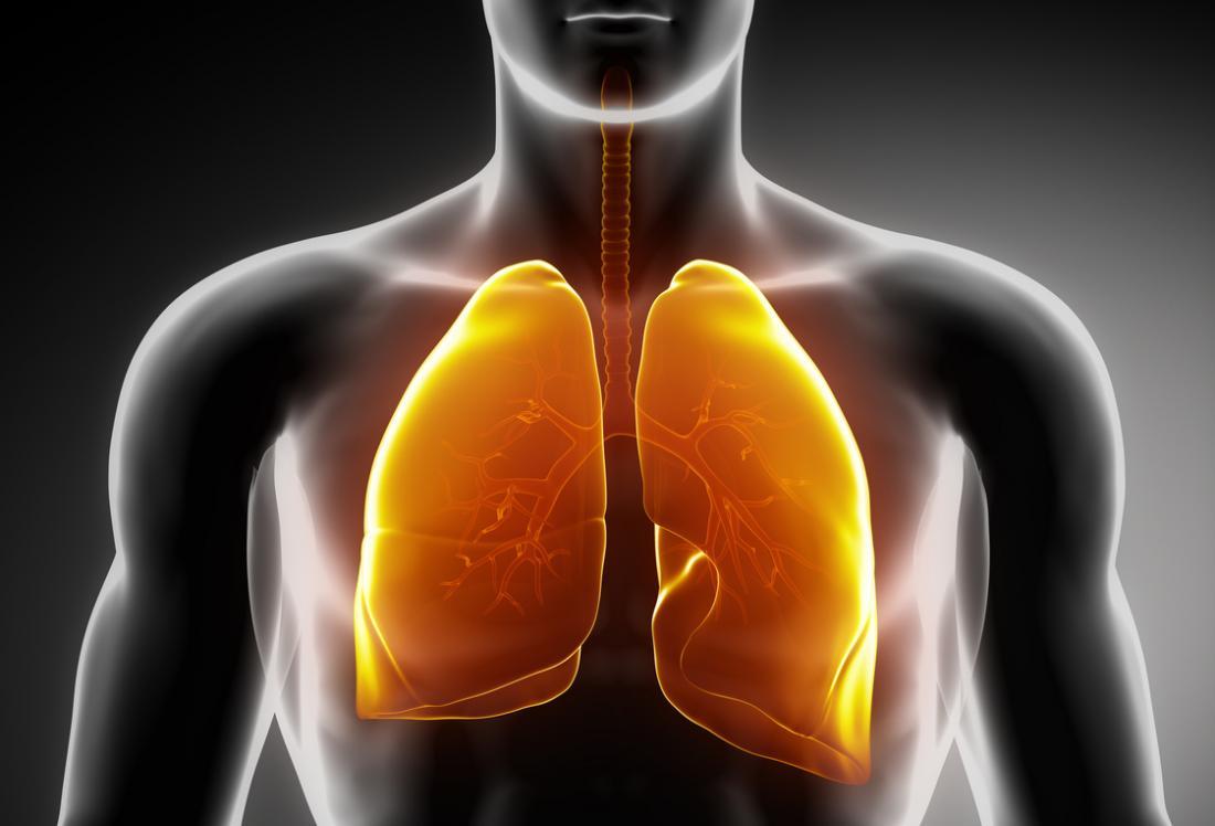 Diagramm der Lunge