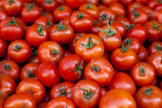 Một loạt cà chua được trưng bày.