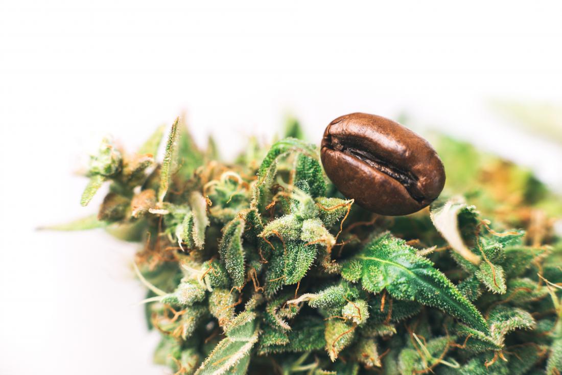 Cannabis e grãos de café