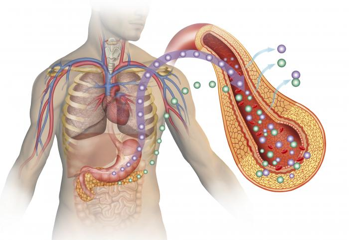 corpo umano con pancreas che mostra il diabete