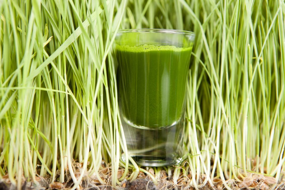 Smoothie vert entouré de pousses de wheatgrass.