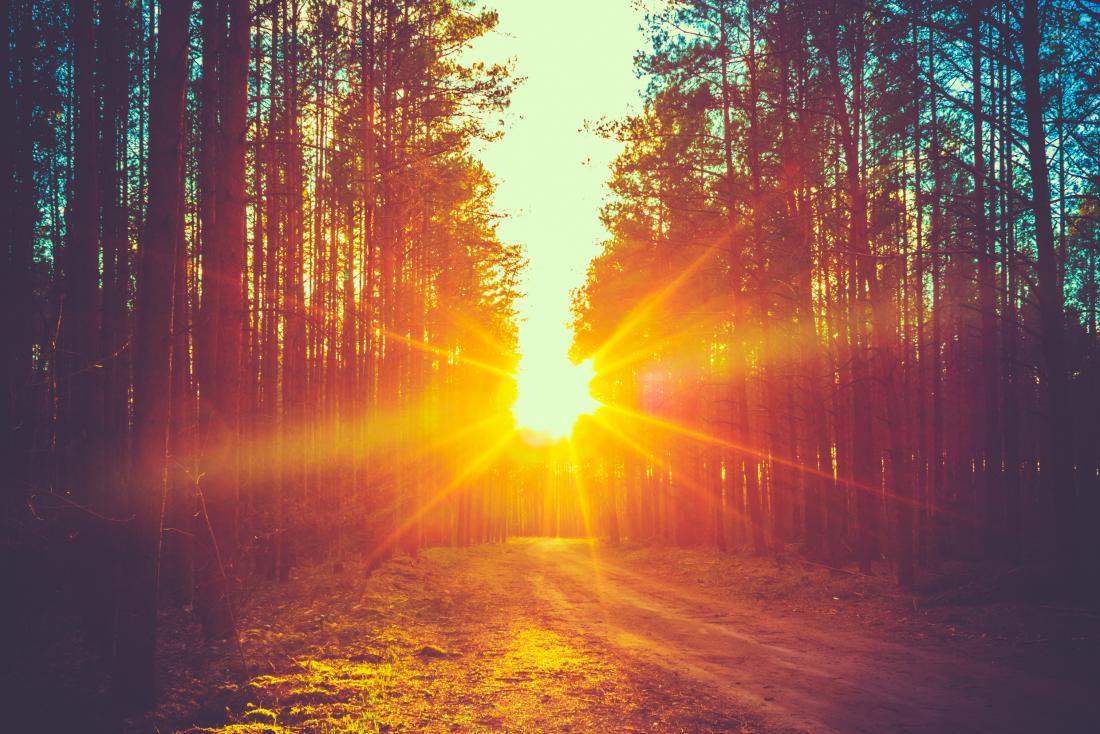 Ein Waldgebiet bei Sonnenaufgang