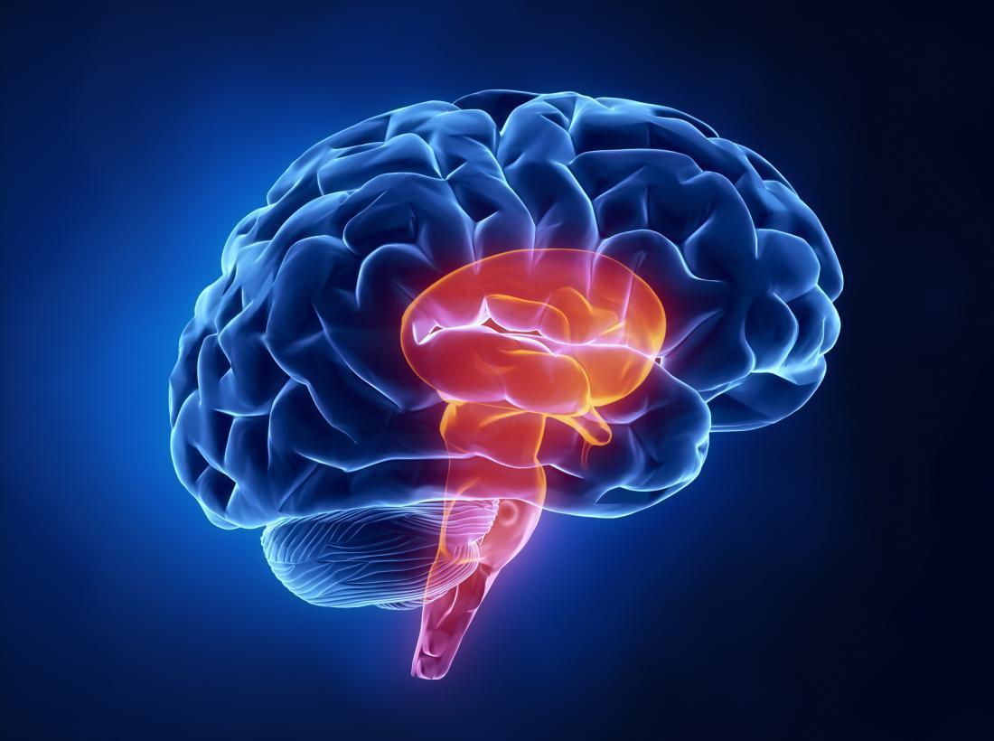 sơ đồ của thân não