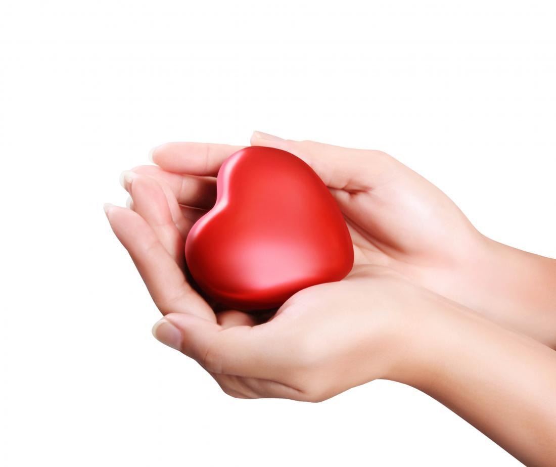 modello di cuore che si tiene nelle mani
