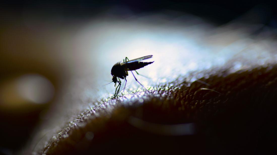 Vírus do Nilo Ocidental