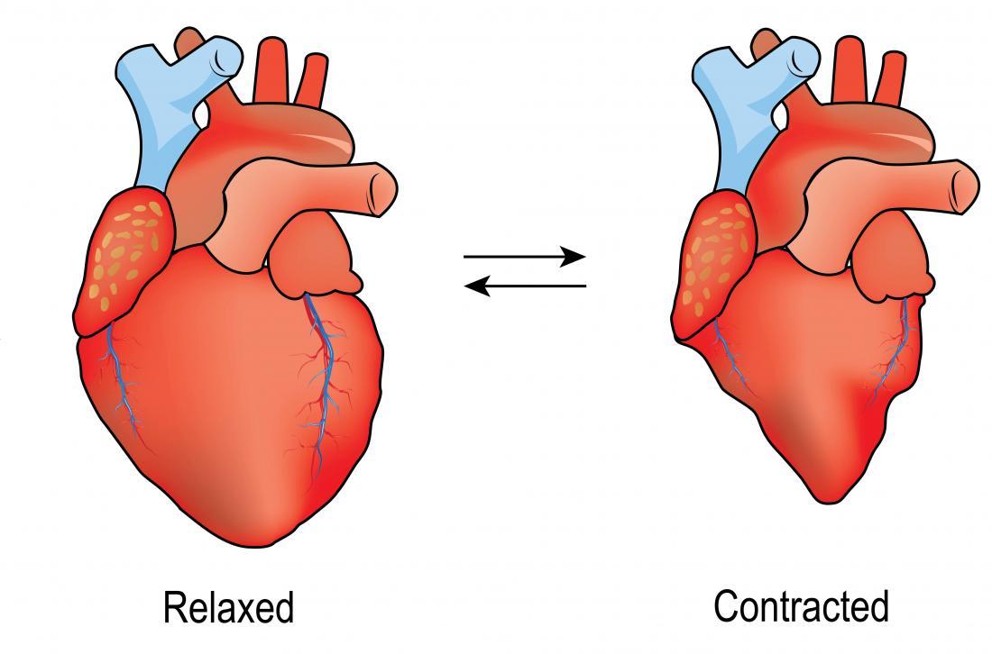 Diagramm eines Herzens, das sich entspannt und zusammenzieht. Diastole vs Systole