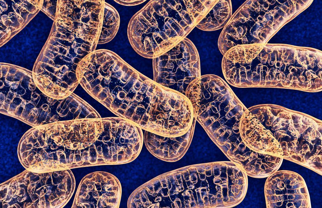 Illustrazione dei mitocondri