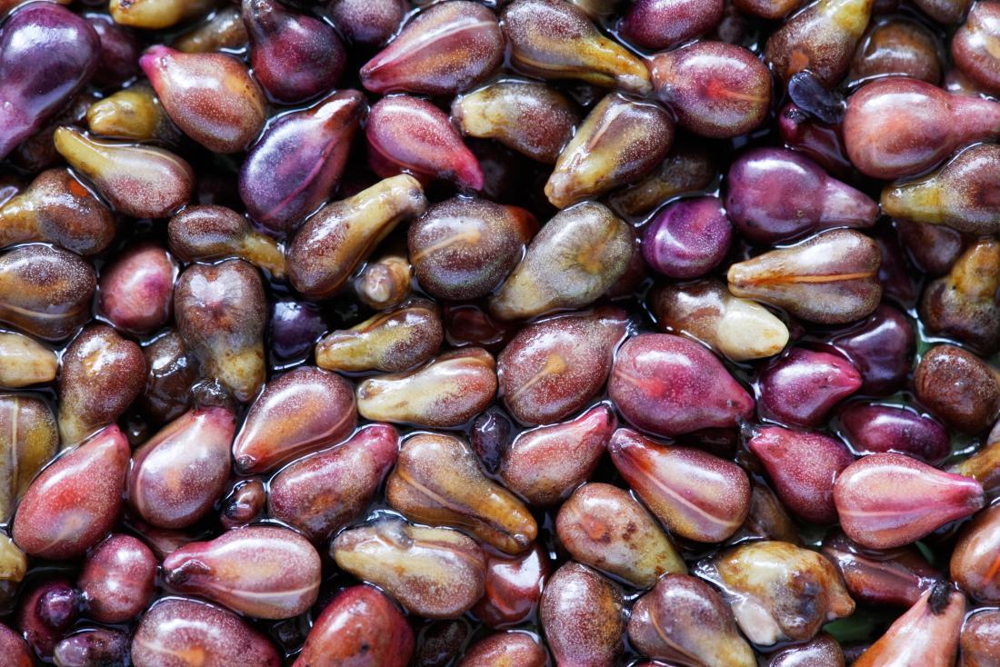 ブドウ種子エキス