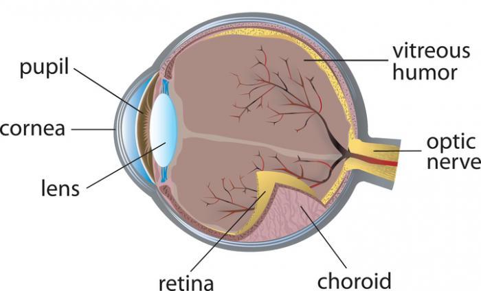 Diagrama de olho