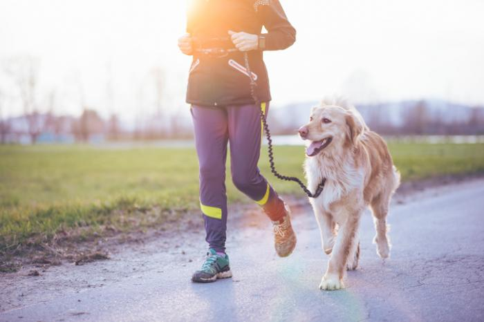 Une personne âgée promène son chien dans un parc