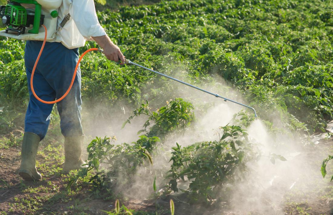 農場で野菜作物の分野に農薬を吹きかける人。