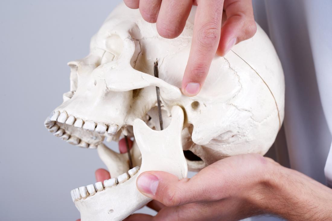 [モデルの頭蓋骨にtmjの症状を指摘する]