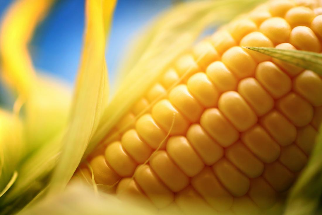 close-up, imagem, de, espiga milho, que, pode, causar, branca, specks, em, tamborete