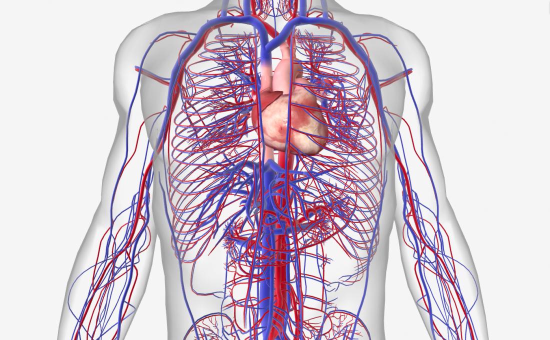 Welche Krankheiten beeinflussen das Kreislaufsystem? - DeMedBook