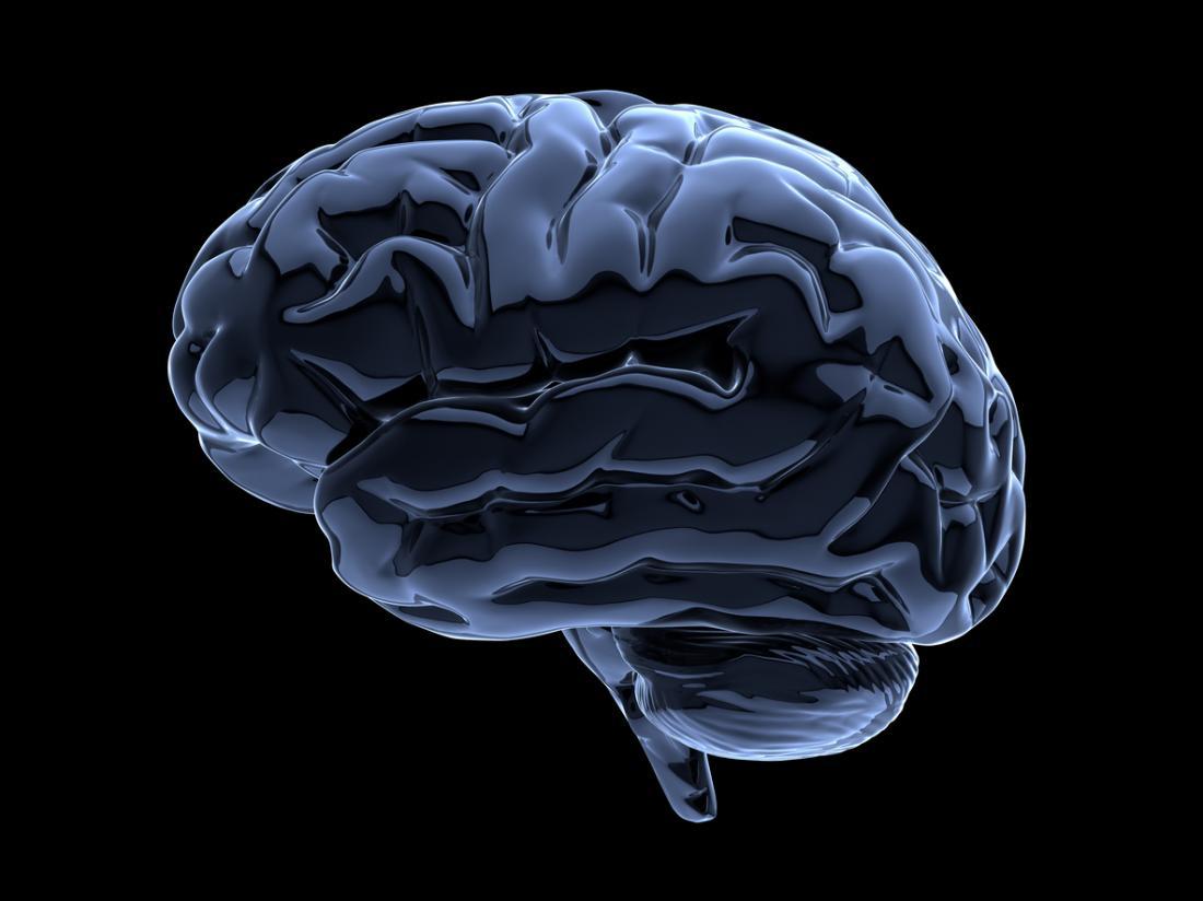 uma ilustração do cérebro humano