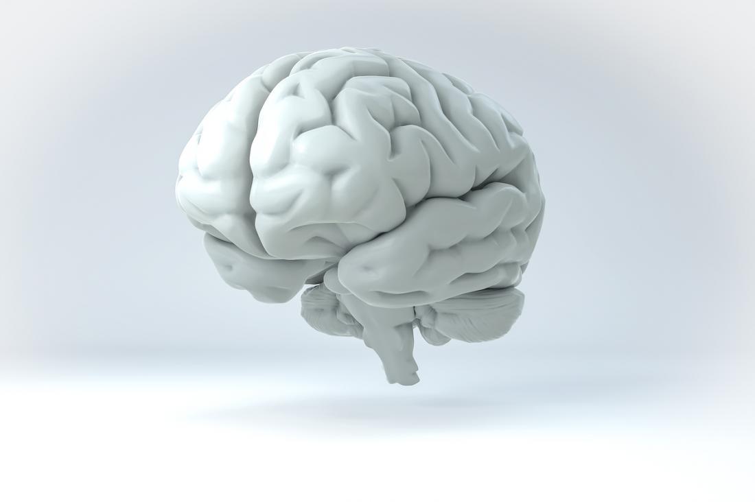 [beyin beyaz zemin üzerinde gösterimi]
