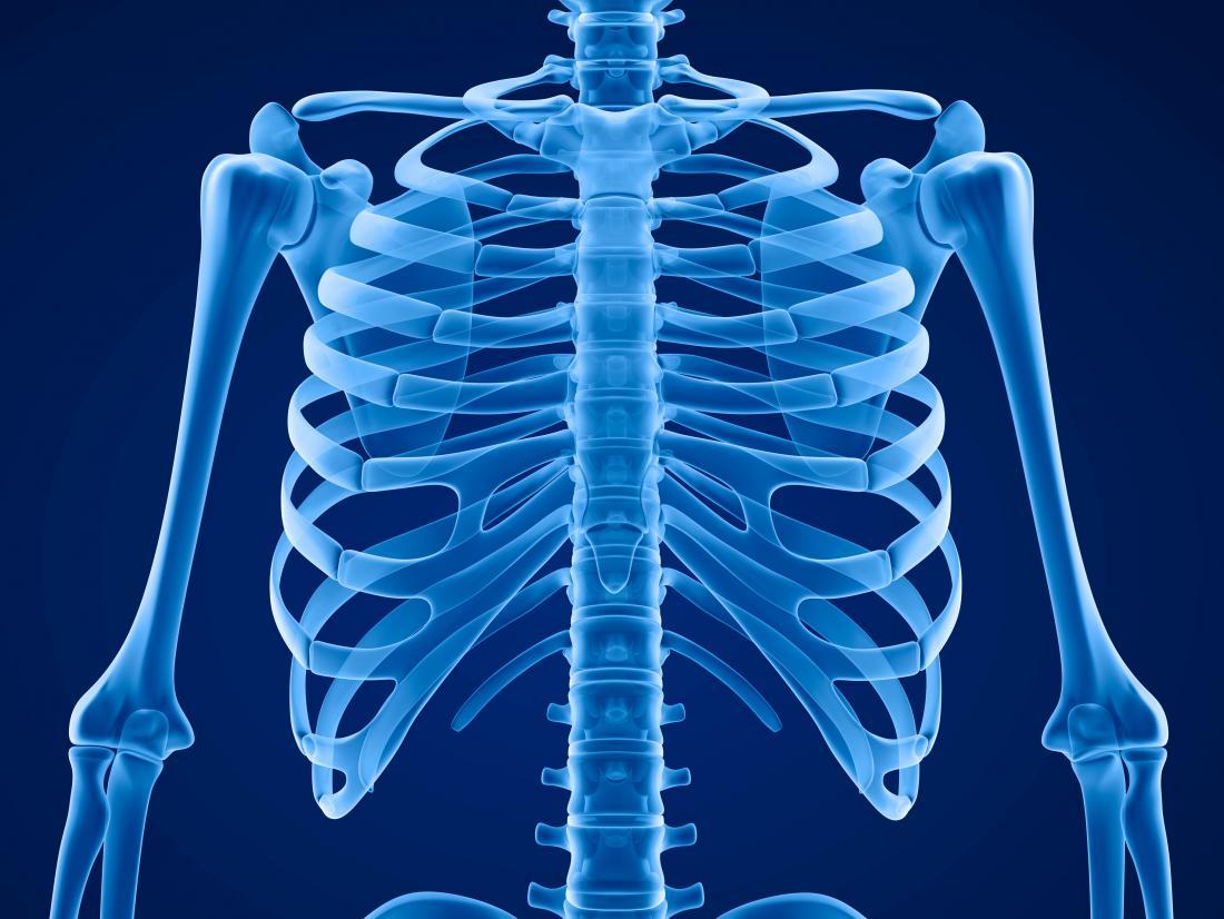 scheletro che mostra gabbia toracica