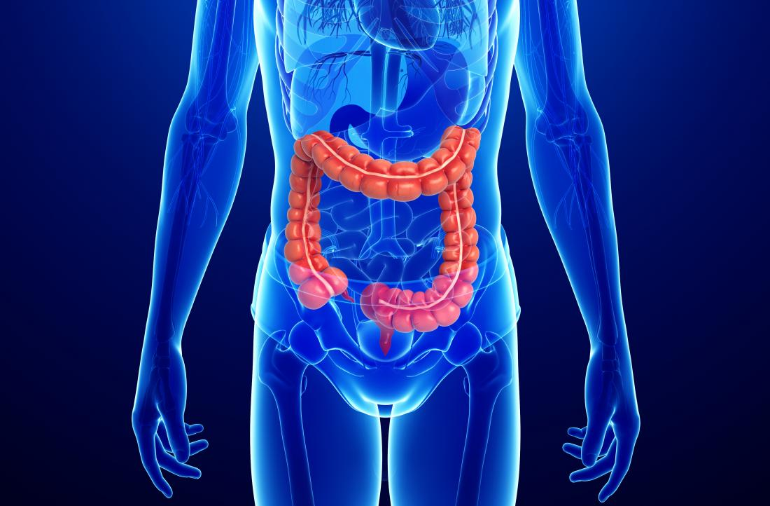 diagramma del colon