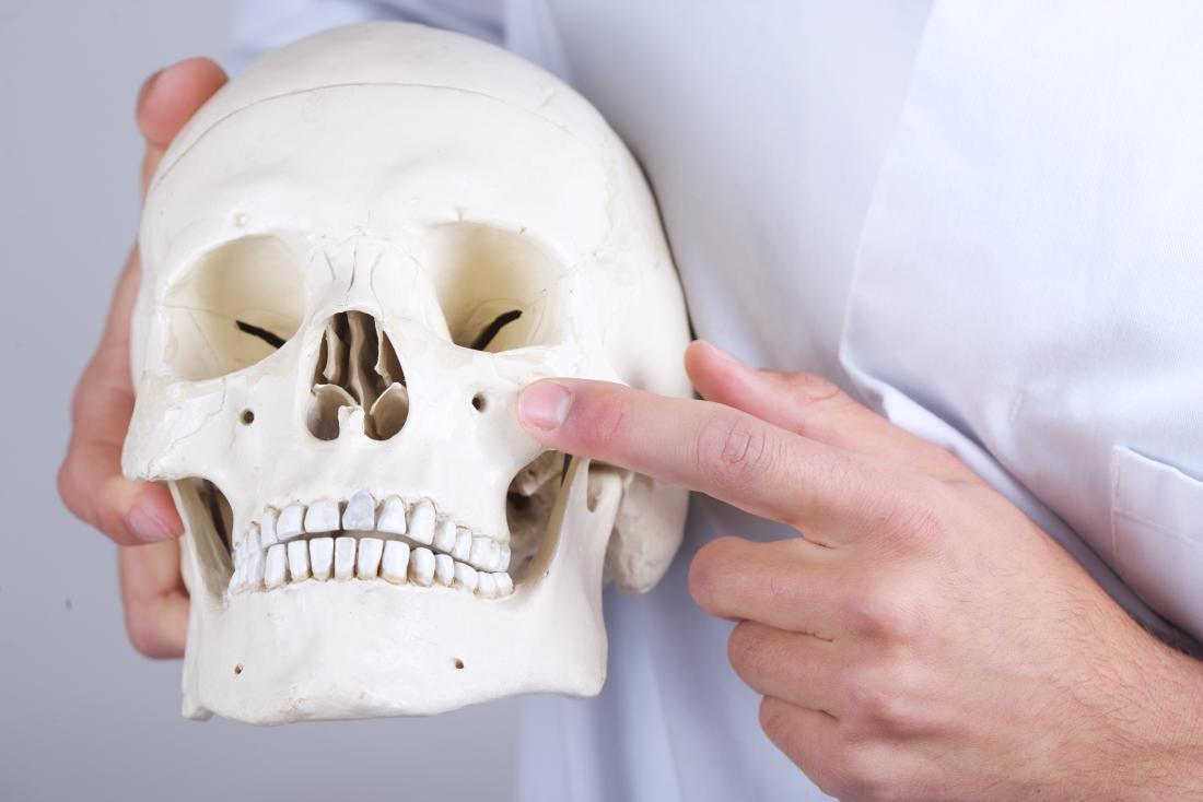 人間の頭蓋骨のモデルを指している医者は、トリアッハー・コリンズ症候群の症状を説明しています。
