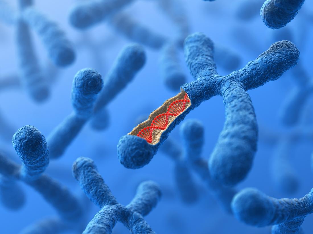 Gráfico de seção transversal de um cromossomo X