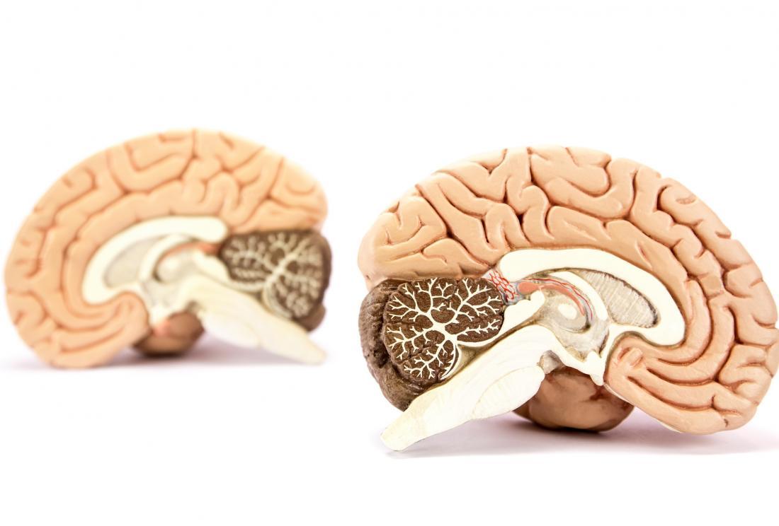 Двете страни на мозъка, наляво и надясно, показани от модела на човешкия мозък, разделени на две полукълба.