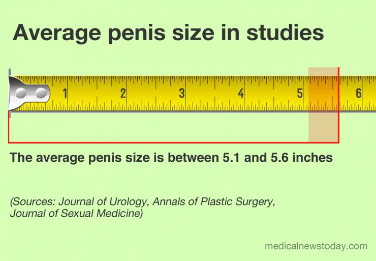 Die durchschnittliche Penisgröße in Zoll