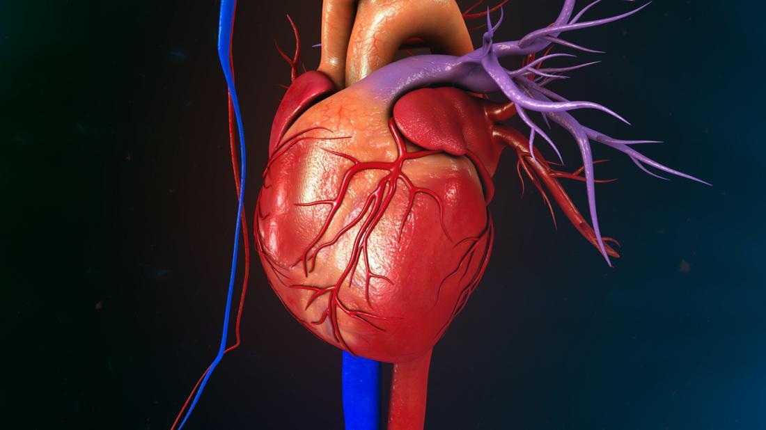 diagramma grafico del cuore umano