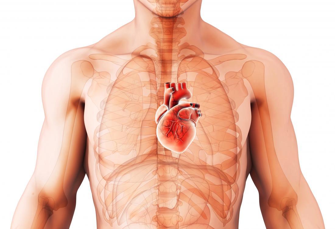 人間の心臓の心臓拡張の図