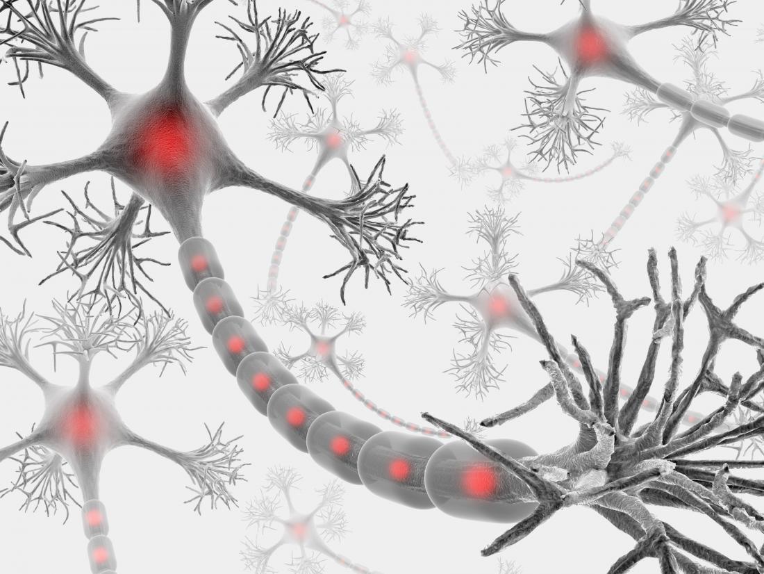 Miyelin kılıflı beyin nöronları.