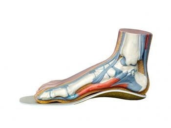 [Struktur des Fußes]