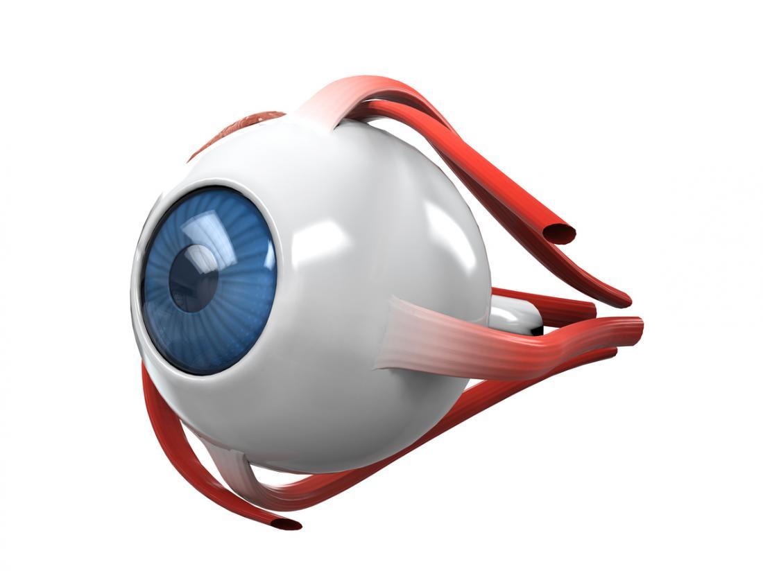 Мускулите на окото
