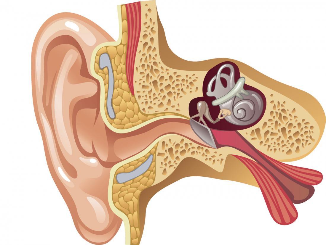 Schema dell'orecchio interno