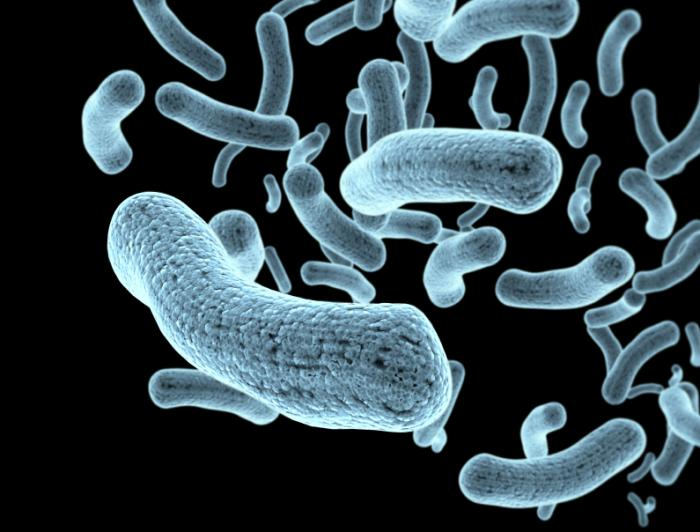 [bactéries]