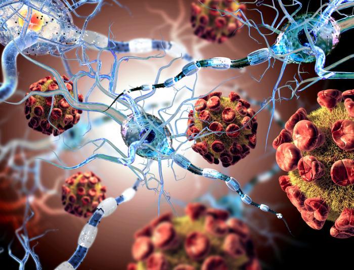 Imagem do vírus atacando as células nervosas.
