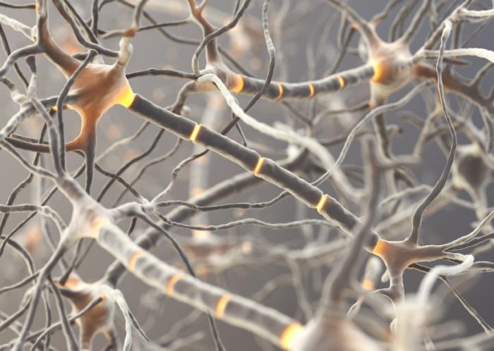 Imagem de neurônios.