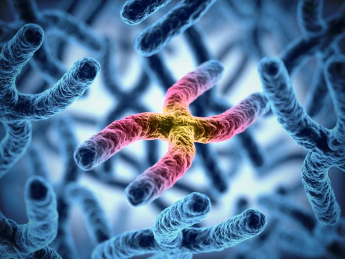 Immagine dei cromosomi.