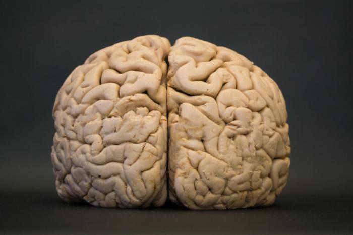 [Човешкият мозък е запазен]