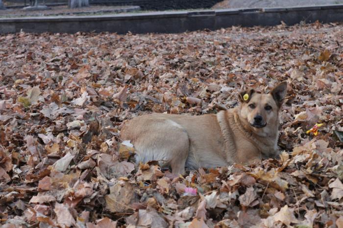 [Hund sitzt in abgefallenen Blättern]