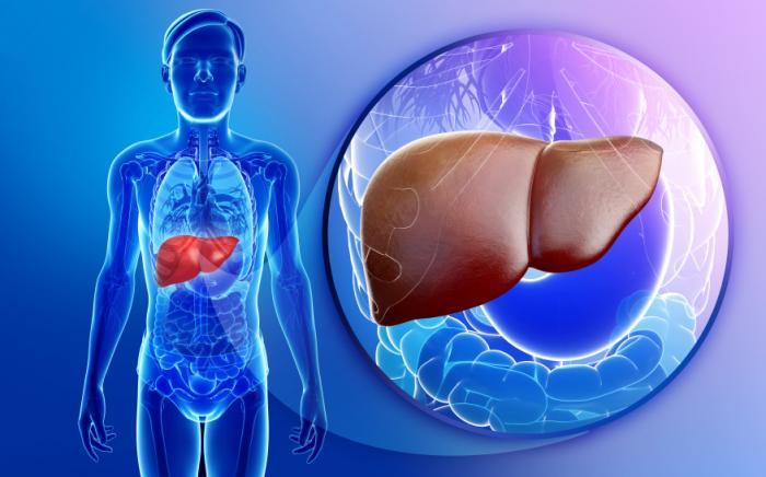 Imagem do fígado.