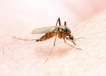 [mosquito]