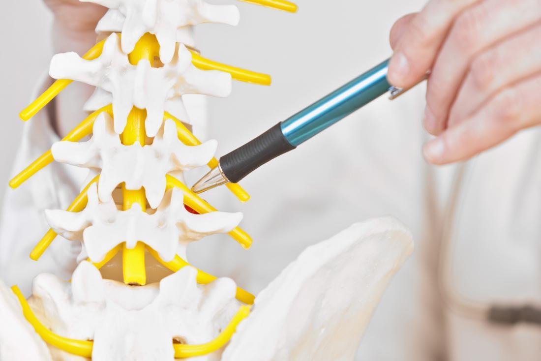 脊柱のモデルを指し、腰椎の脊椎を通って走る神経を指し示す手。
