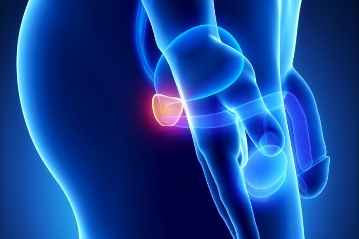 Bild der Prostata von der Seite