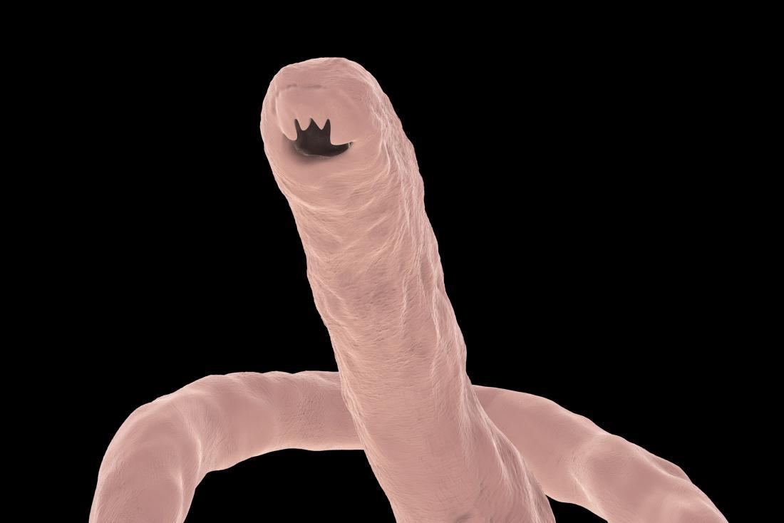 Les ankylostomes peuvent causer une maladie intestinale.