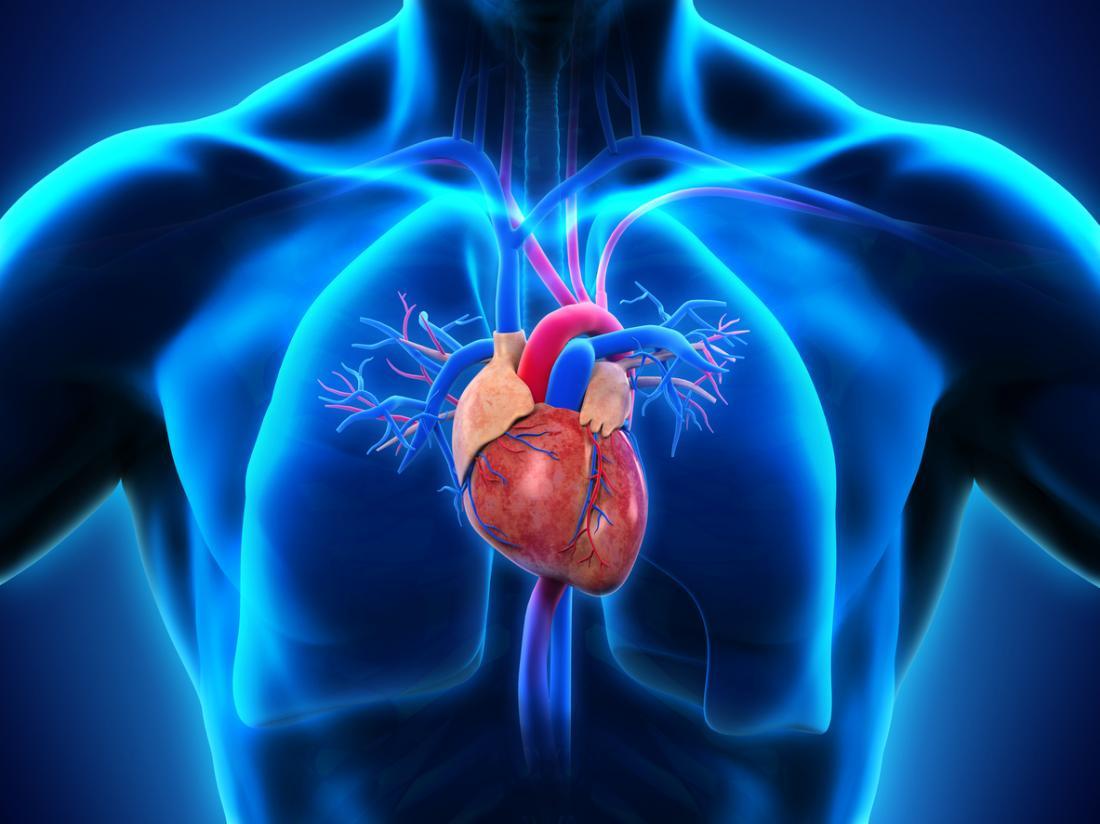 diagramma del cuore