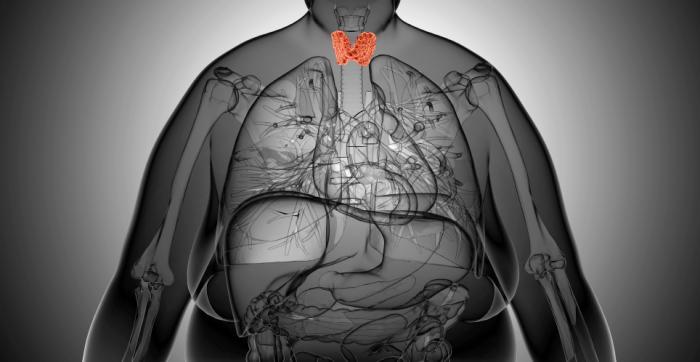 [Diagramme de la position thyroïdienne]