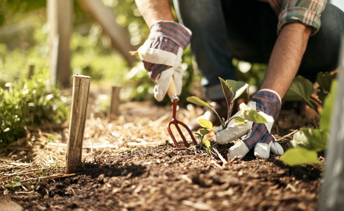 晴れた日に手袋を着て土壌を掘る園芸人。